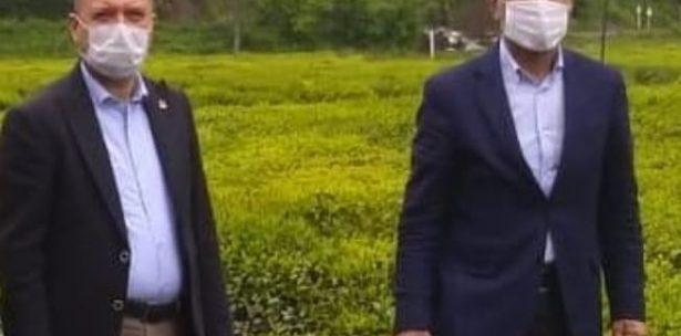 CHP'li Vekiller Çay Topladı
